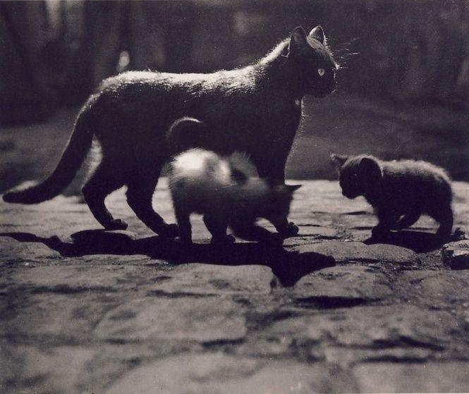 Cats, 1930s.  by Brassaï