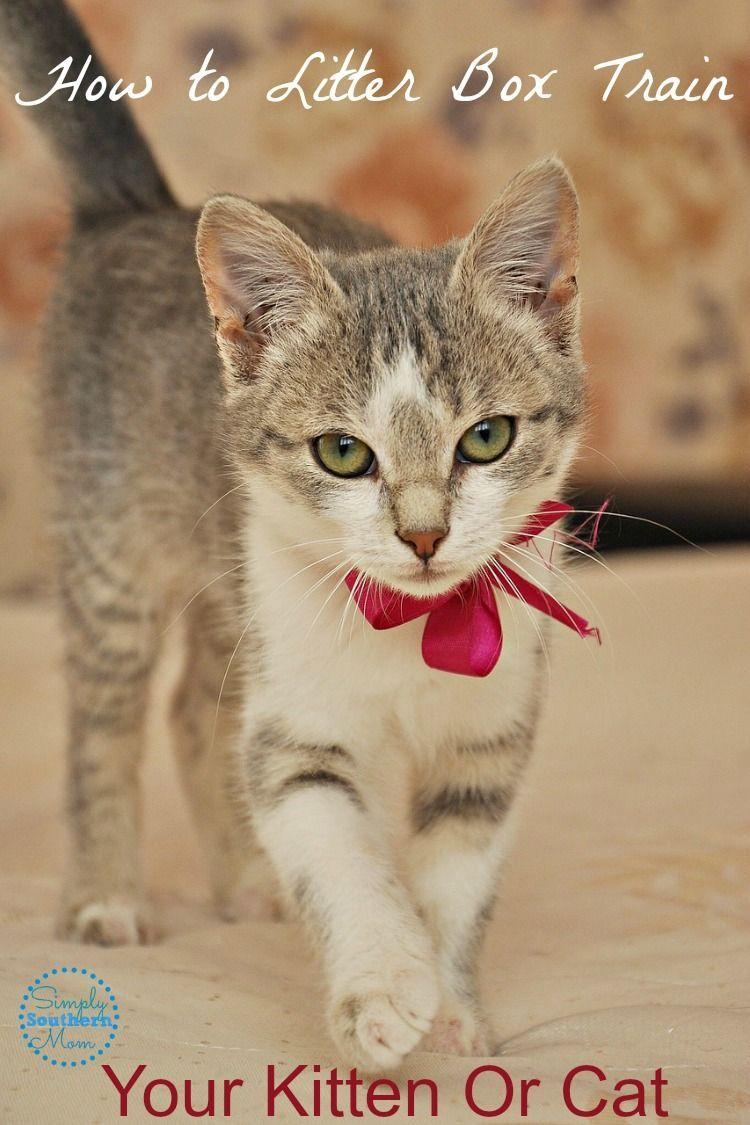 litter box training tips kitten cat Cute cats, Cats and