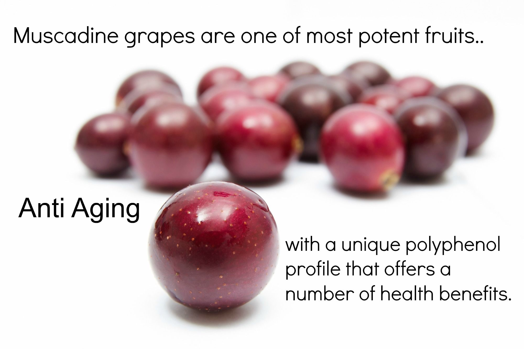 Unlike Other Grapes Muscadine Grapes Boast Superior Concentrations Of Ellagitanins That When Combined W Green Grapes Nutrition Blackberry Nutrition Nutrition