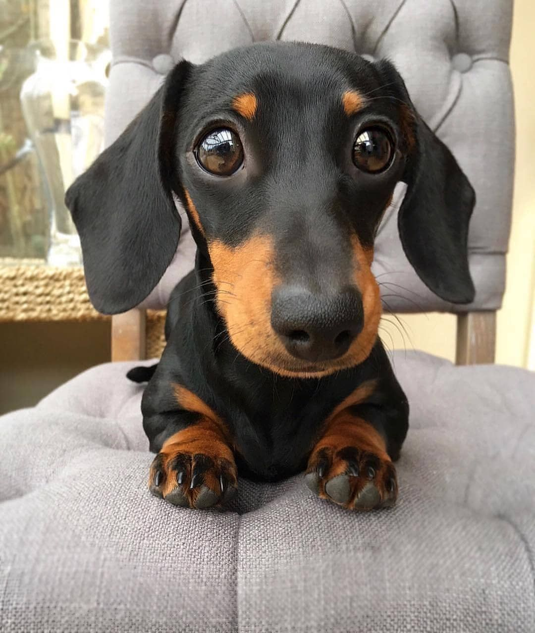 Dog Lovers Club On Instagram From Martha Dachshund