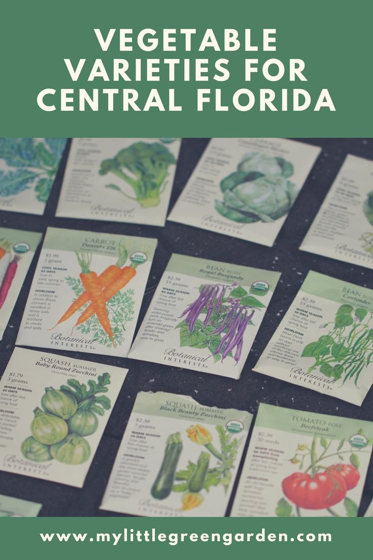 Vegetable Varieties for Central Florida   Florida ...