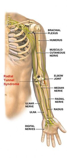 Image Result For Radial Nerve Course Medical Pinterest Therapy