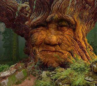 Photo of Mein Freund die Eiche (Unsere Bäume und die Umwelt retten) – #Bäume #die #Eich…