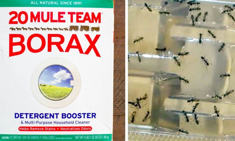 Use BORAX And Say Goodbye To Fleas, Roaches, Ants And