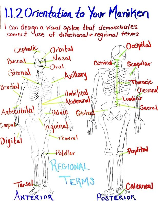 Chemistry Anchor charts | Human Body Systems - Todd County High ...