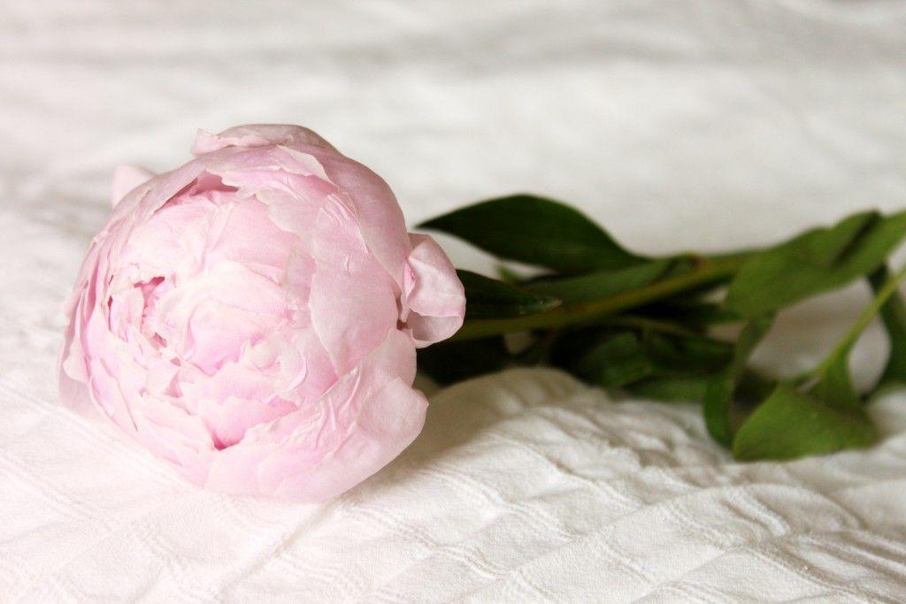 sarah bernhardt eine pfingstrose und die belle poque rote hochzeit rosa pfingstrosen und. Black Bedroom Furniture Sets. Home Design Ideas