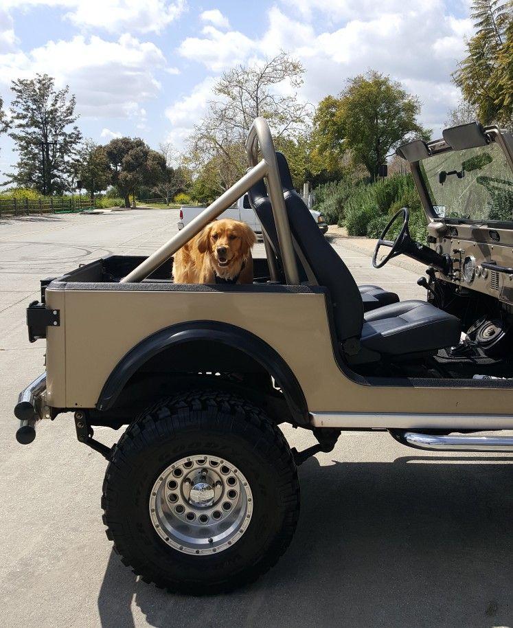 Jeep Dealership Golden : dealership, golden, Coco,, Golden, Retriever