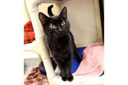 Update: Adopted :-) Whoopie has been adopted from the Seattle Humane Society