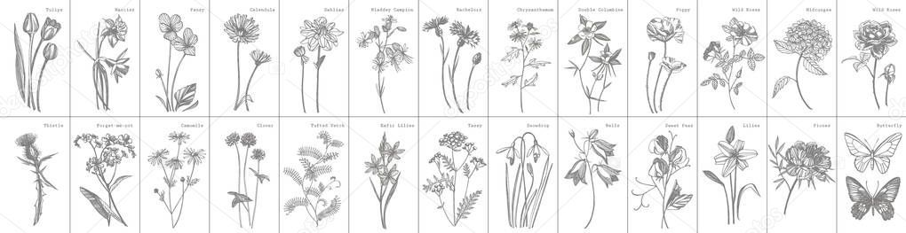 Collection of hand drawn flowers and herbs. Botanical plant illustration. Vintag ,