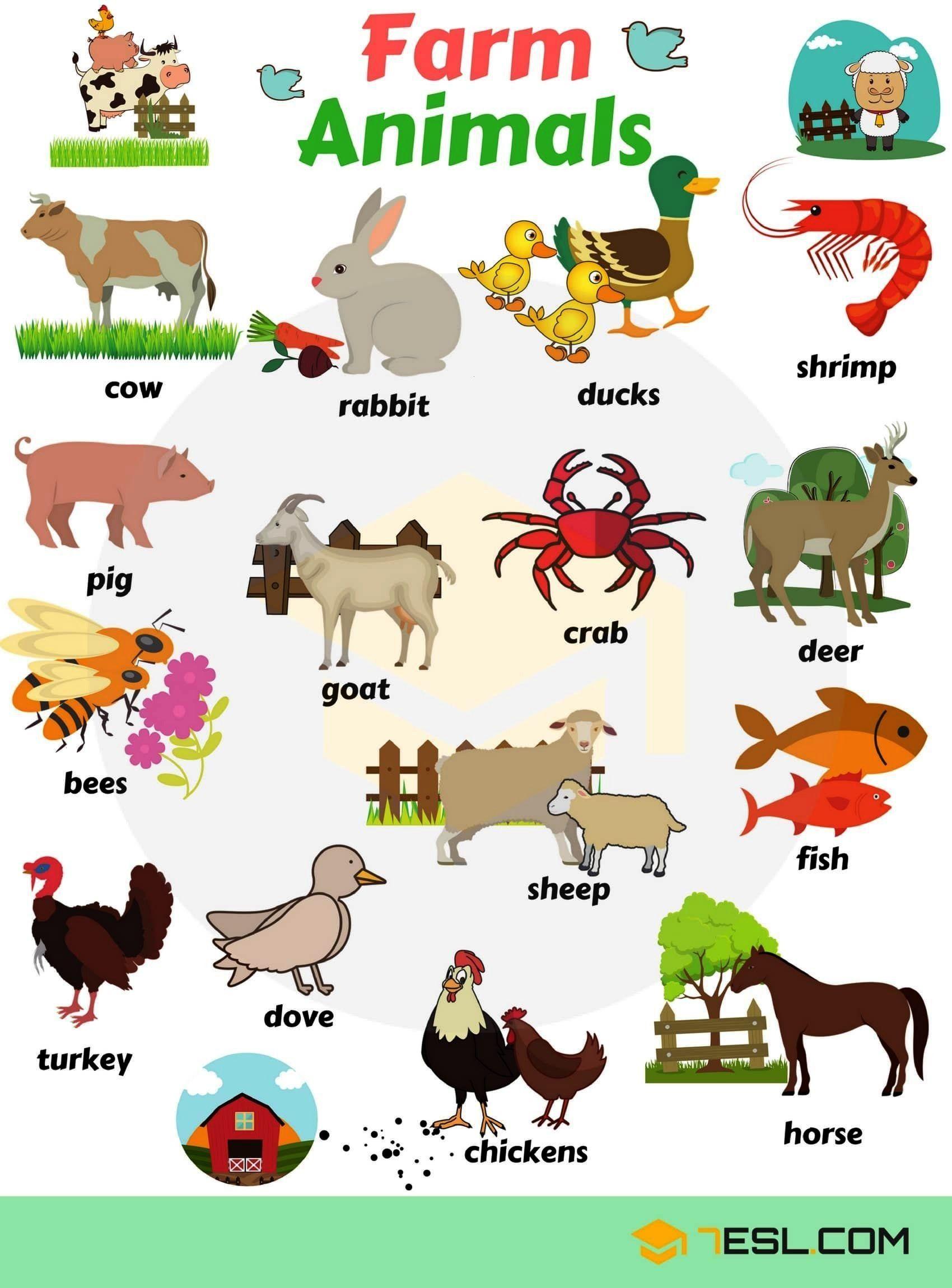 Animals Farm Listfarm Animals List Farm Animals List Farm Animals List 3 6ks In 2020 Animals Name With Picture Farm Animals List Animals Name In English