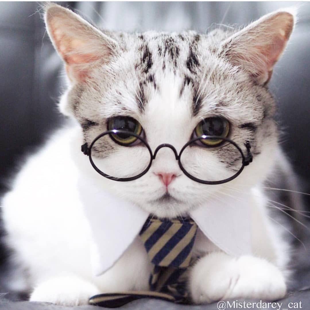 Ig Boss From Misterdarcy Ca Kucing Dan Anak Kucing Anak Kucing Gemas Anak Kucing Menggemaskan