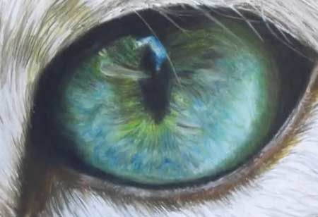 Free Acrylic Painting Lessons | Speed Drawing - Cat Eye - Video Lessons of Drawing & Painting