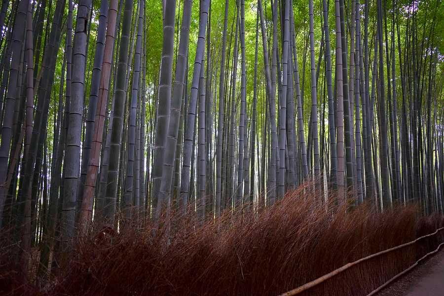 Direction la célèbre bambouseraie d'Arashimaya à Kyoto avec ses milliers de bambous, ses singes et ses petites constructions en pierre !