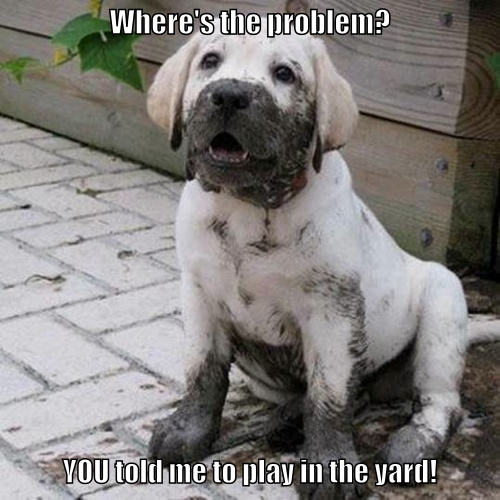 You just cannot explain 'mud' to a puppy!