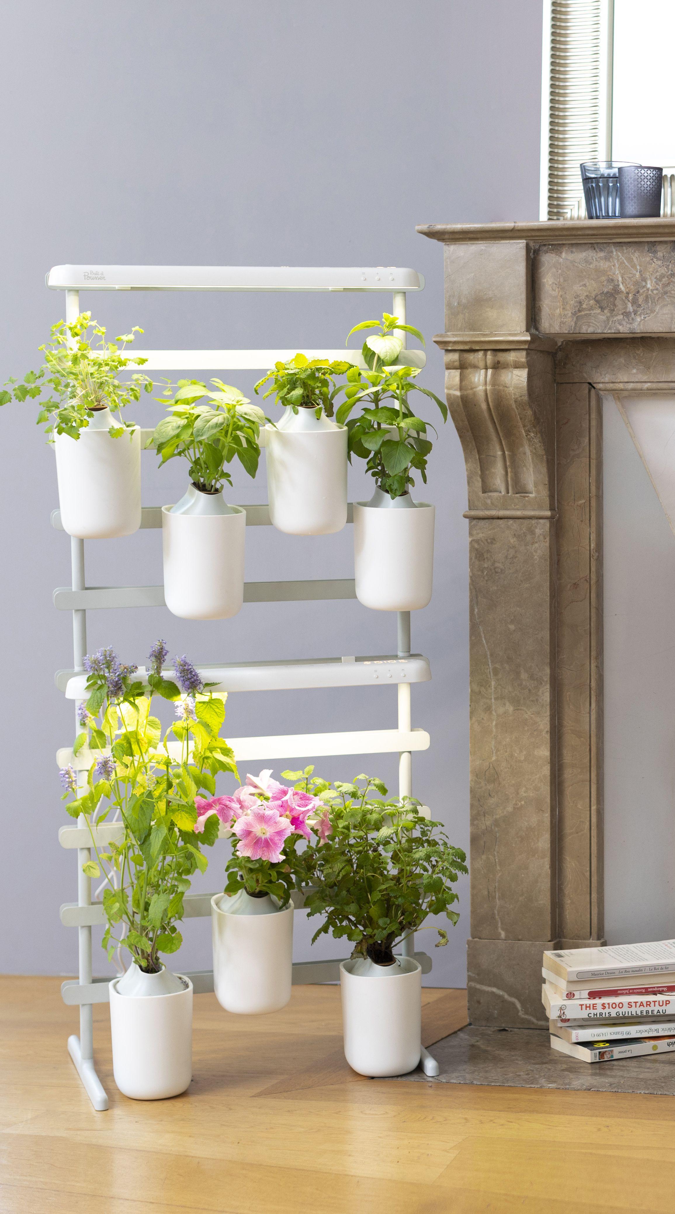 Faire Pousser Du Persil En Appartement modulo | jardinage de légumes d'intérieur, potager et
