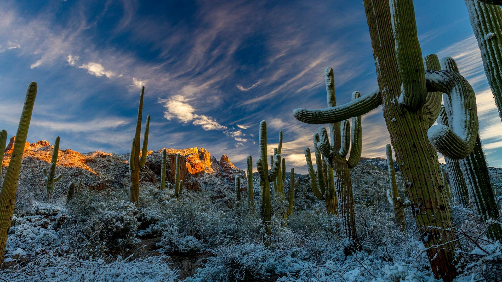 Get Ready For The Winter solstice 2018 Sonoran desert