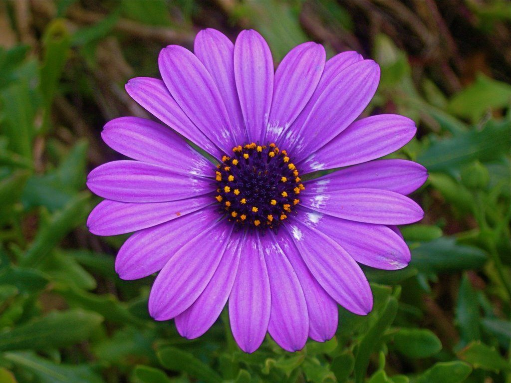 If you remember when a purple flower similar to this was my profile if you remember when a purple flower similar to this was my profile picture youve been following me for a long time izmirmasajfo Choice Image