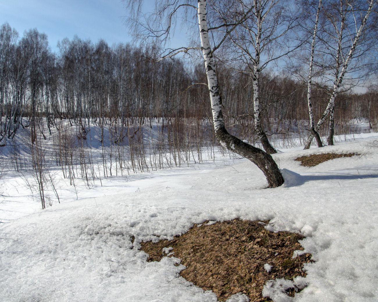 картинка проталин весной ходе