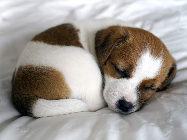Sleepy Puppy. | Cute puppies, Puppies, Cute animals