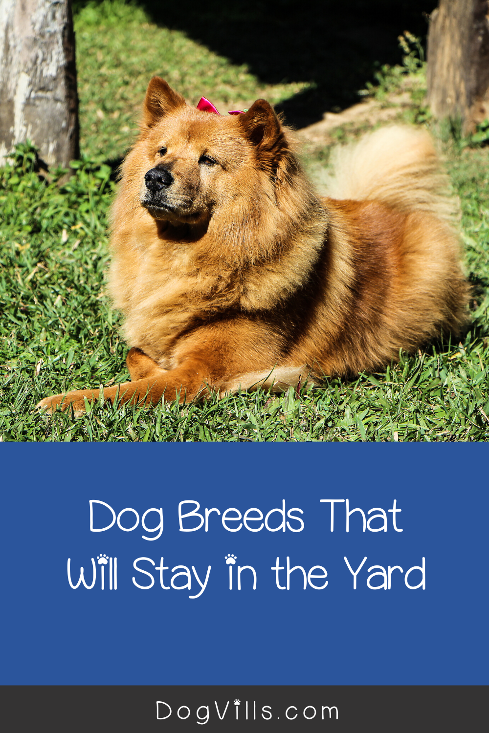8 Dog Breeds That Will Stay in the Yard - DogVills in 2020 | Dog breeds,  Dogs, Best small dogs