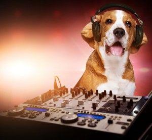 Liberty National Leadership Academy 201 Dogs Pet Travel Beagle Dog