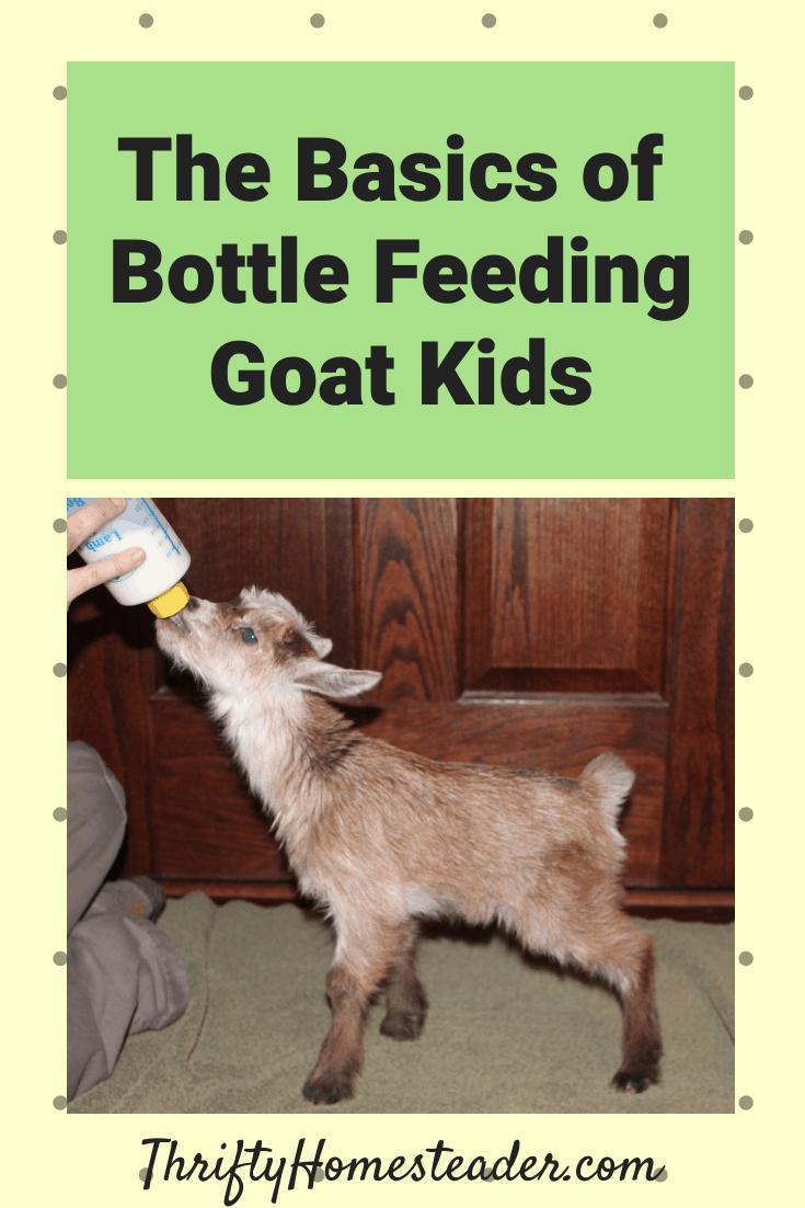 Basics Of Bottle Feeding Goat Kids The Thrifty Homesteader In 2020 Feeding Goats Goat Kidding Baby Goats