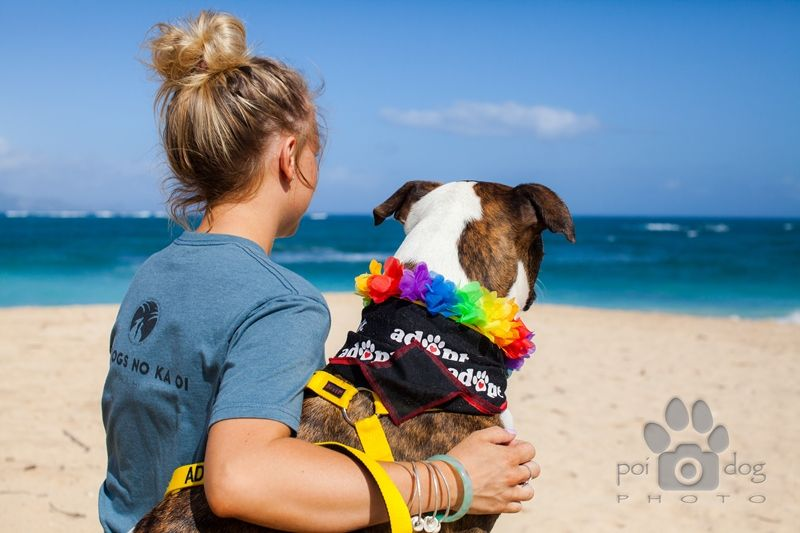 Maui humane society take a rescue dog to the beach while