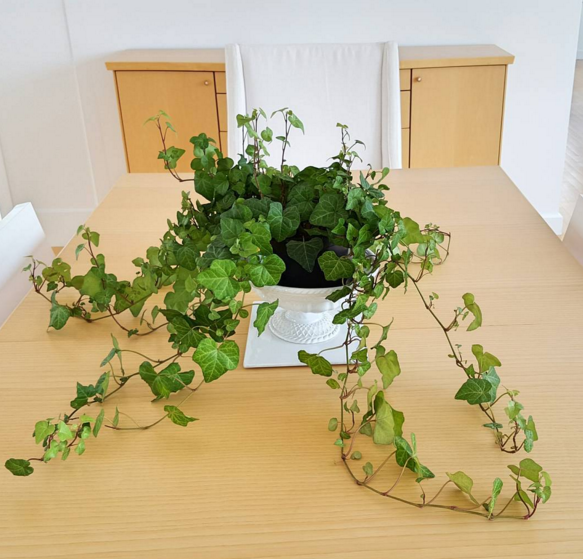 English Ivy Hedera Helix 15 Air Purifying Plants That Will Turn Your Home Into A Lush Forest