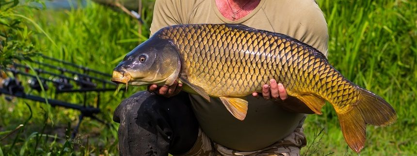 Carp Fishing Tips: How To Fish For Carp and Catch Them