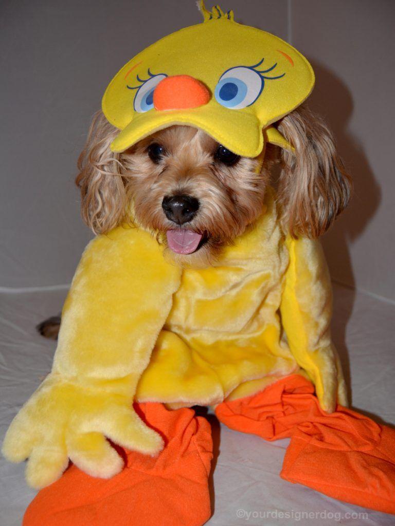 Tweety Bird - Halloween Costumes for Dogs - YourDesignerDog