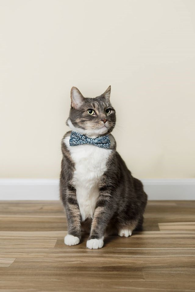 Dapper Cat Gets A Purrfectly Appropriate Photoshoot For His Birthday