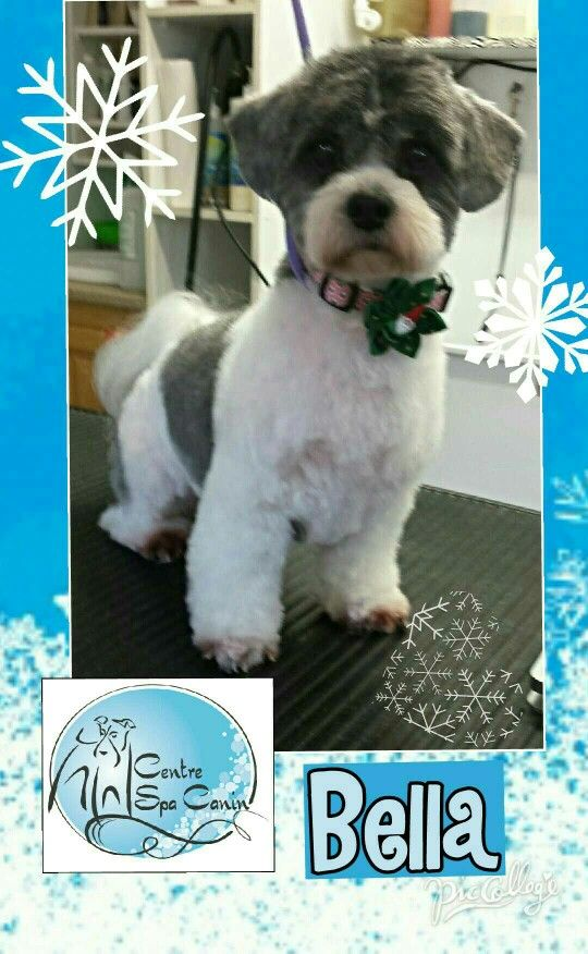 Pin By Zi Steinig On Toilettage Centre Spa Canin Marinatrembay Dog Grooming Business Dog Grooming Grooming