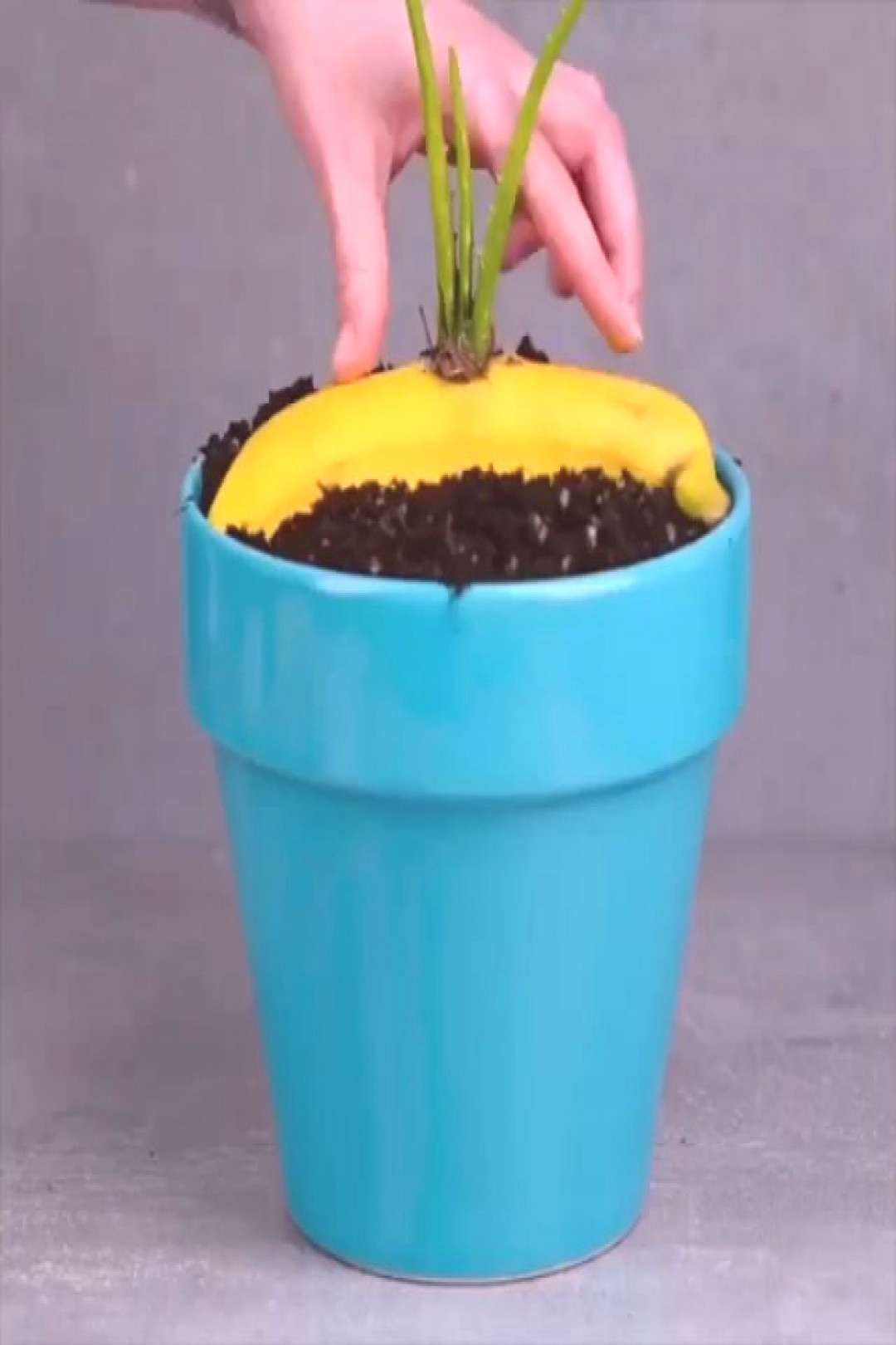 #diyvideos #tutorial #follow #plant #hacks #diy #by #t Plant hacks Follow Follow Follow By: #diy #diyvideos #tutorial #tYou can find Diy makeup and more on our website.Plant hacks Follow Follow Follow By: #diy #diyvideos #tutorial #t