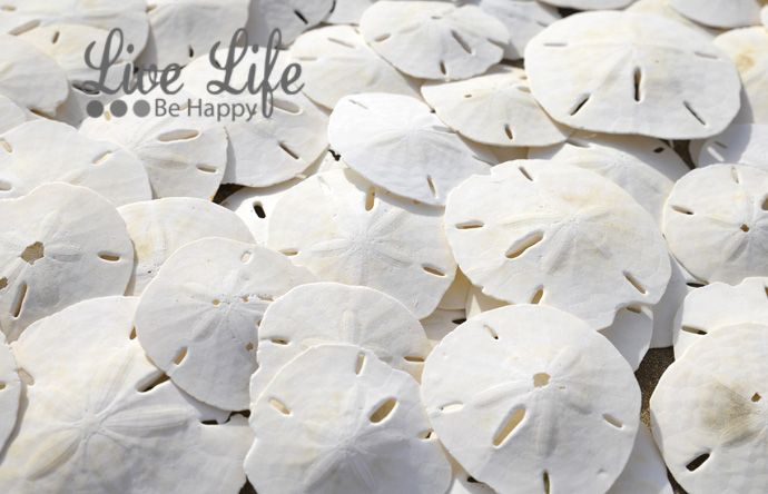 Great Place To Find Sand Dollars In Florida Travel