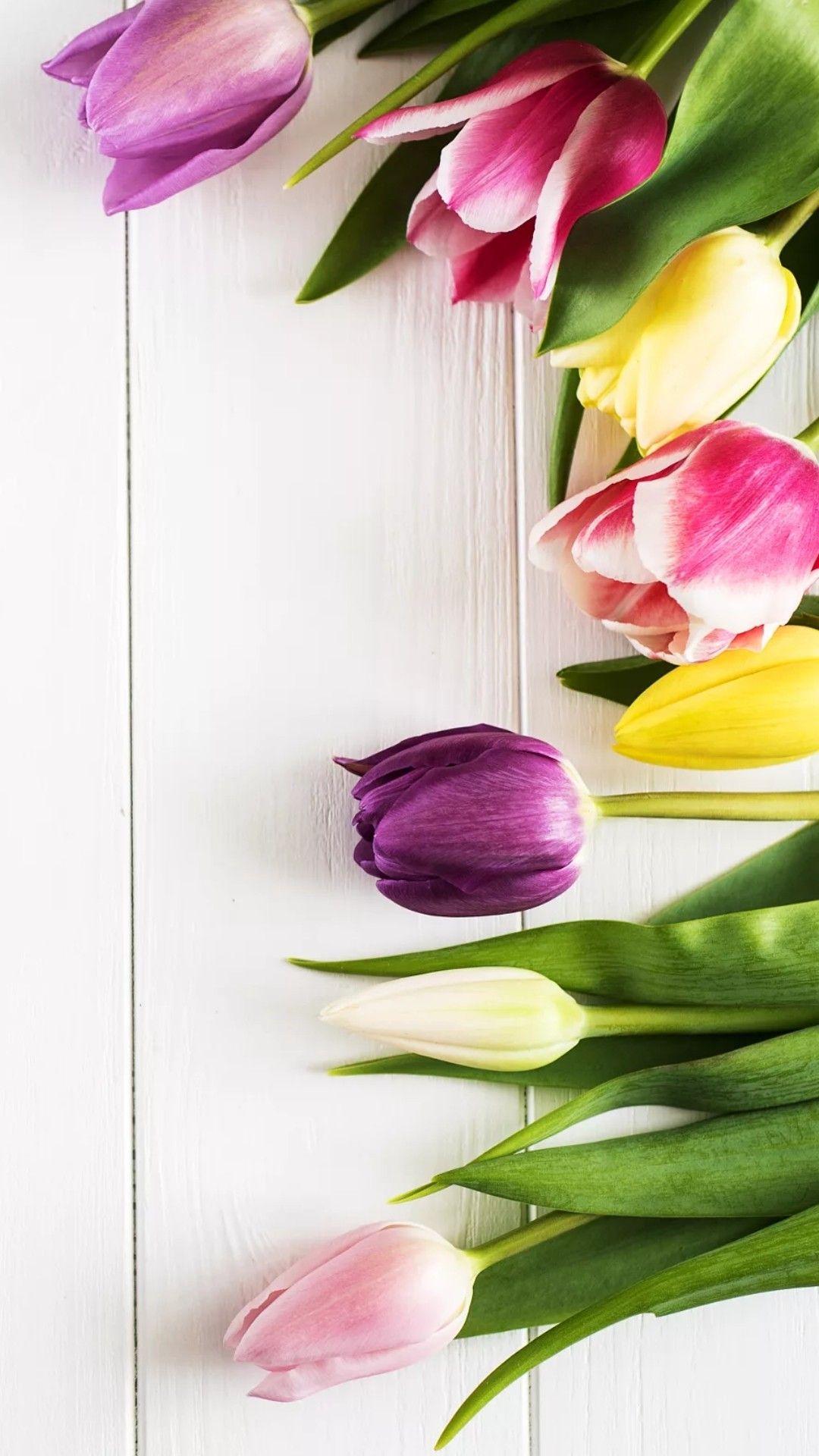 Tulips Fondos De Flores Ideas De Fondos De Pantalla Flores Tulipanes
