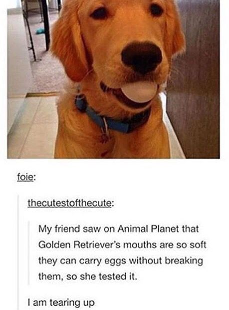 Pin By Jayden Worriax On Animals Cute Animals Cute Funny