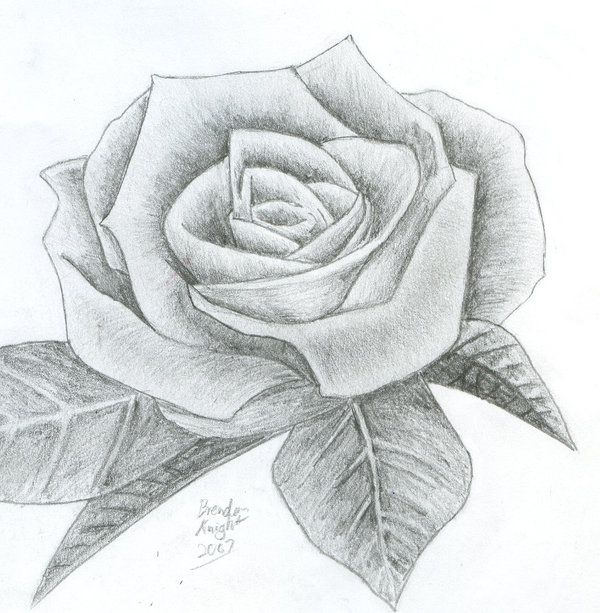 Rose Drawings In Pencil | Rose, pencil. by ~Mandalore ...