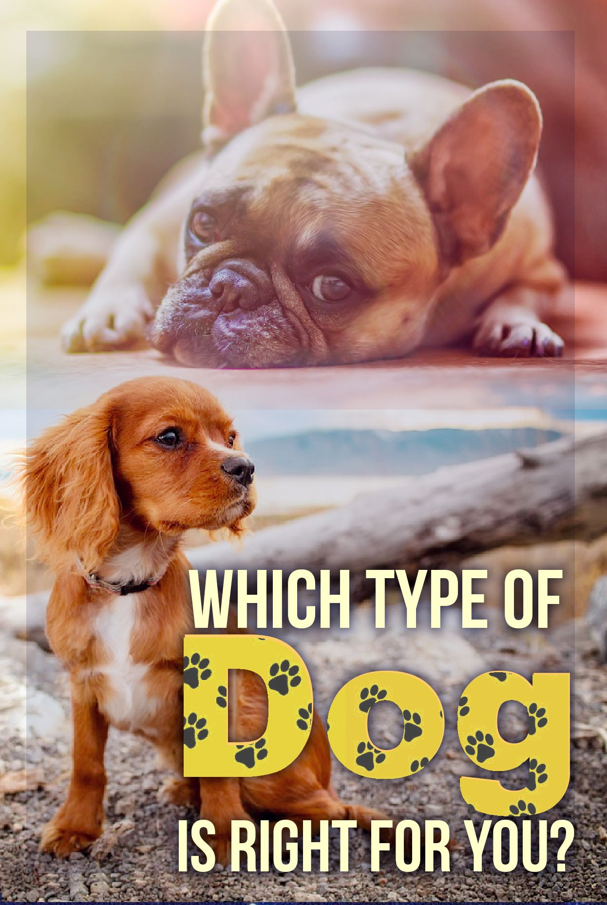 Quiz Which Type Of Dog Is Right For You Who Are You Dog