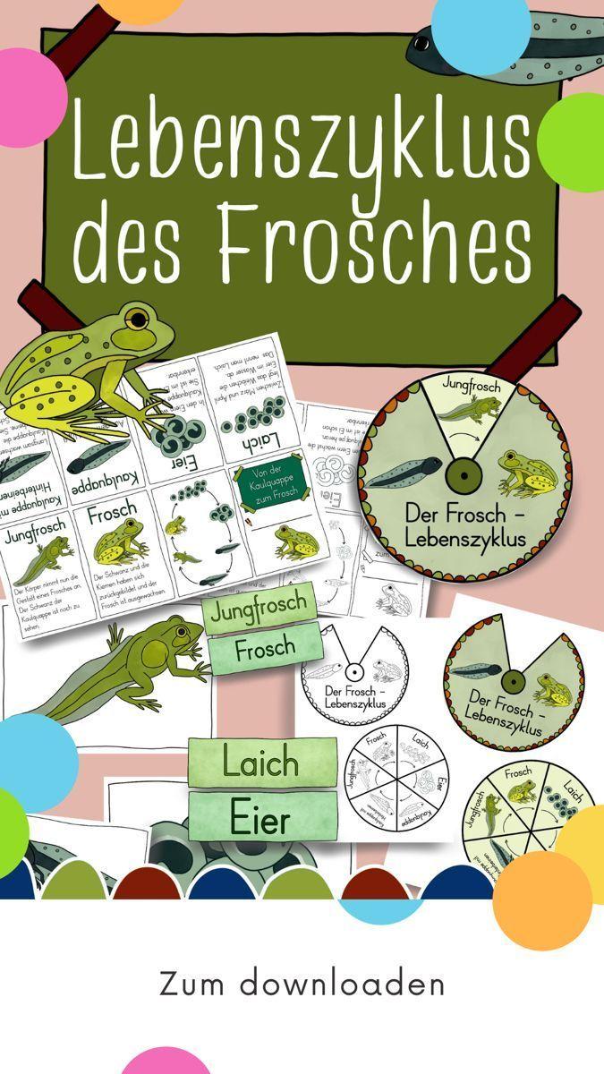 lebenszyklus des froschs ausführliches material chalk and
