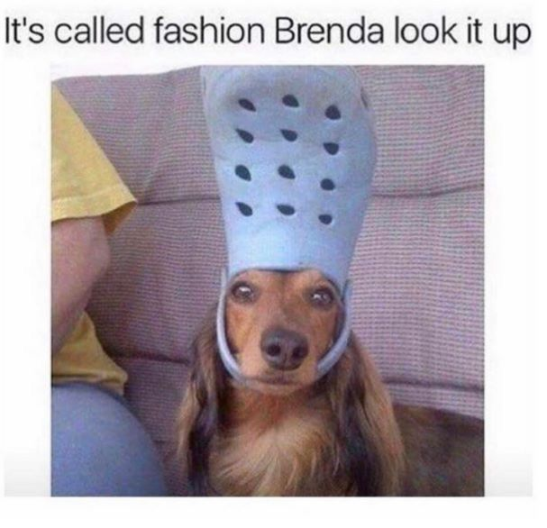Pin By Carmen Stephens On To Laugh A While Funny Dog Memes Funny Animal Memes Cute Funny Animals
