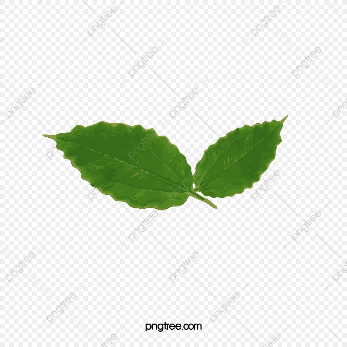 ورق الشجر يترك شريحة واحدة خطوط واضحة Png والمتجهات للتحميل مجانا Plant Leaves Leaves Foliage