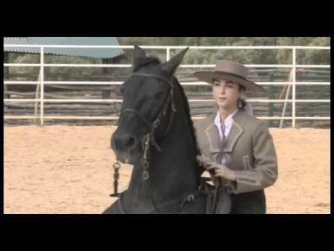 Kenzie Dysli Motiviere Dein Pferd Der Weg Zur Freiheitsdressur U Zirzensik Freiheitsdressur Pferde Dressur