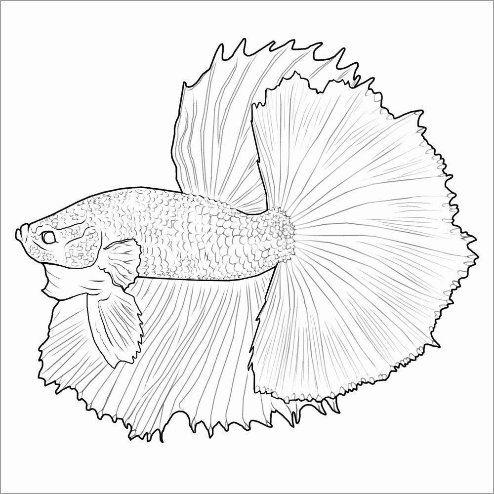 betta fish coloring page elegant betta
