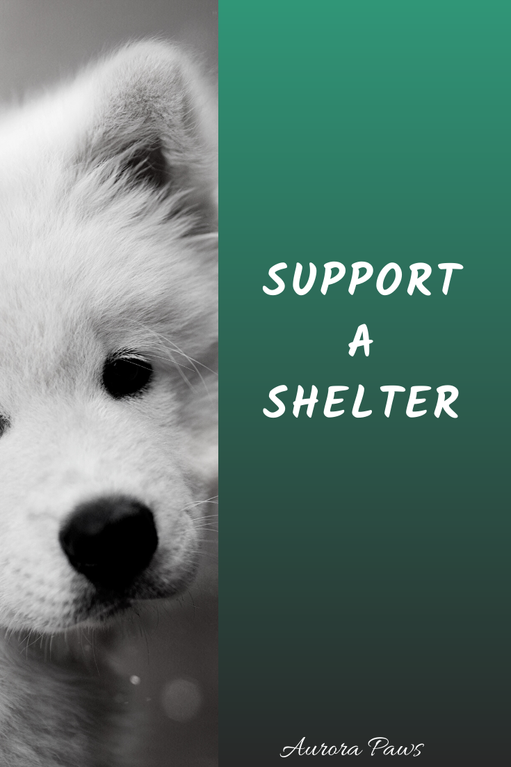 make a donation, shop and support a shelter, adopt, don't