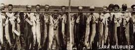 """Leech Lake Musky Explosion"" before catch and release"