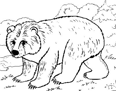 Printable Winter Animal Coloring Pages Free For Kids