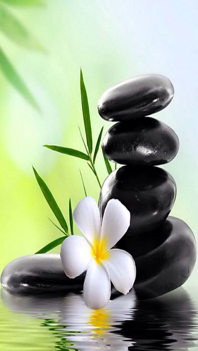 White Flower Black Stones Peinture Fleurs Fond Ecran Zen Peinture Arbre Abstrait