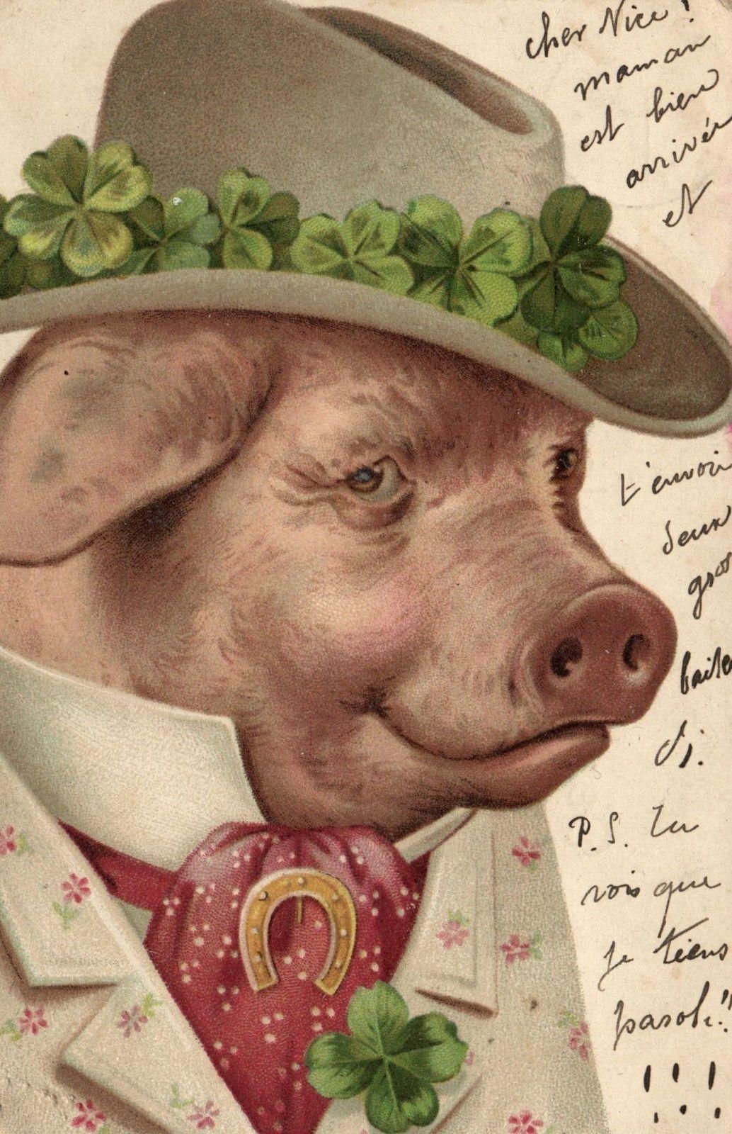 Открытки свиньями, другу картинка прикольные