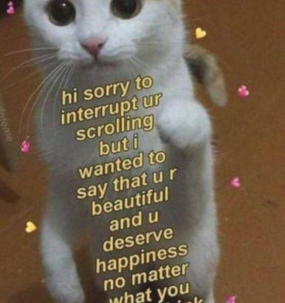 Sorry for the Interruption   Visit   link in the bio  for Funny TShirts   Accessories      Follow  kartzenworldwide for more funny images   videos   #kartzenviral #catoftheday #kitty #goodmood #goodvibesonly #positivevibes #kittycat #goodday #goodnight #catstagram #vibes #wholesome #catsagram #goodtime #kittylove #cutekitty #goodlife #catlovers #summervibes #goodtimes #goodvibes #wholesomememes #cats #catlove #prettykitty #instakitty #funnymemes #cats of instagram #funnymeme #catlover