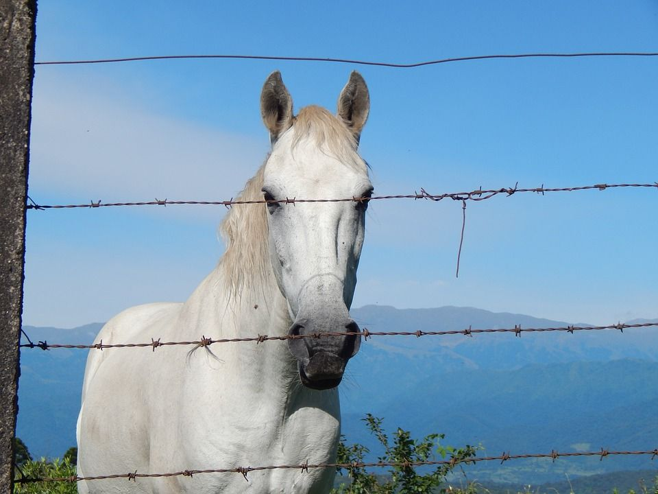 Behind the barbed wire fence #equifirstaidusa #horse #firstaid ...